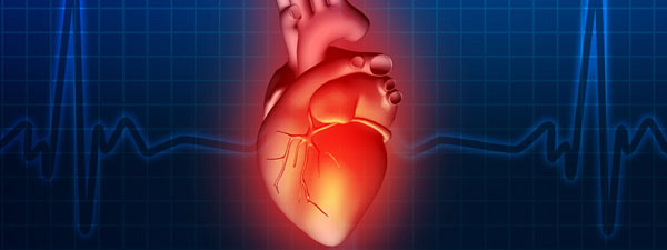 Heart on cardiogram background